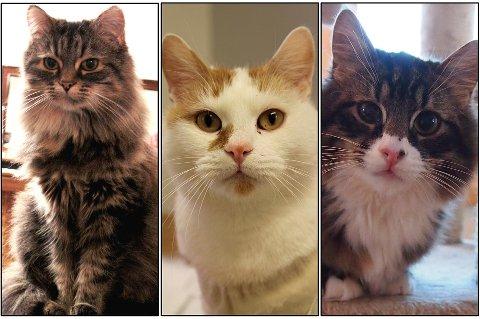 FIKK NESTEN EN MILLION: Dyrebeskyttelsen Norge Tromsø (DBT) ble den store grasrot-vinneren i Tromsø kommune i 2018. Den frivillige organisasjonen hjalp rundt 400 katter i fjor.