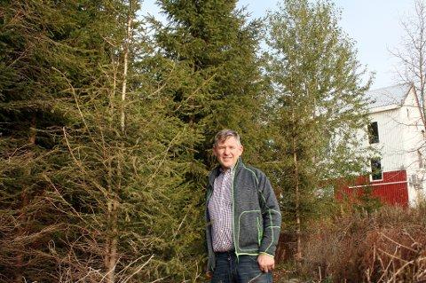 SKJEMMENDE: De forvokste juletrærne spolerer utsikten fra bygdehuset (som vi ser litt av i bakgrunnen), og lokalpolitiker Knut Johnsen vil ha fjernet skogen.