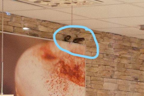 FUGLELIV: Dette bildet ble oversendt Mattilsynet tidlig på morgenen den 13. februar. Fotografiet førte til full rundvask og desinfisering av burgerrestauranten.