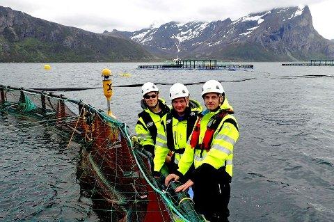 RAMMET: Sessøya er en av de to oppdrettslokalitetene som er rammet. Bildet er tatt i forbindelse med en reportasje for to år siden og viser Torgeir Nordheim (f.v.), Andreas Eliassen og Hans Kristian Larsen.