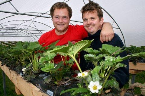 JORDBÆRGUTTER: Robert Innes (t.v.) og Jan Åge Tyldum har kjøpt fire tusen jordbærplanter og håper det skal gi to tonn bær i løpet av sommeren.