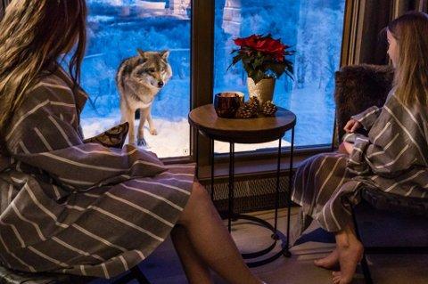 LITE LØNNSOMT: Spektakulære Wolf Lodge, utleiehytta plassert blant ulvene inne i Polar Park i Bardu, ga liten avkastning i 2018. I 2019 ser ting bedre ut, sier daglig leder Jens Kristian Dybwad.