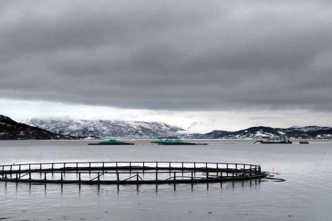 ILA-SYKDOM: Oppdrettsanlegget ved Bjørga i Solbergfjorden må slakte ned etter smitte av viruset som fører til laksesykdommen ILA.