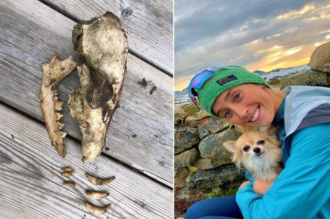 EKKELT: Maja Walthinsen og kjæresten fant hodeskallen fra et dyr i en bacalao-boks på hytta. Nå lurer hun på om Nordlys-leserne kan hjelpe henne med å fastslå om det er fra hund eller rev. Foto: Privat
