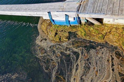 TJUKT AV SKIT: - Folk og turister vil spy når de ser havna, sier Torstein Lorentsen i båtforeninga.