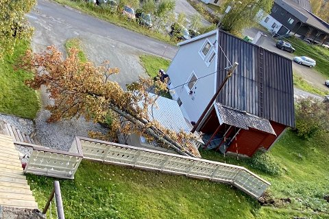 Her veltet treet over ledning og garasje nær sentrum på Bardufoss.