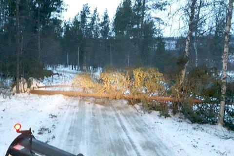 NEDBLÅSTE TRÆR: Steienveien i Bardu ble under Ylva stengt av tre som blåste over veien, og slike episoder kan det bli flere av nå.