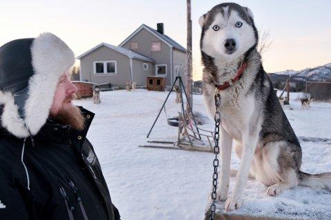 PÅ VENT: Amarok er en av 33 sibirian husky i hundegården på Ottemoen som venter på at det skal skje noe.