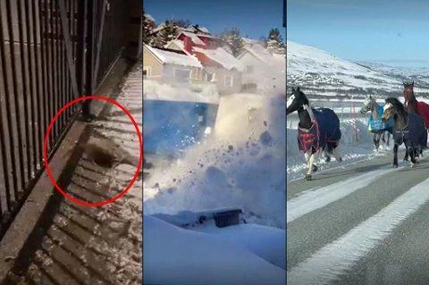 SUKSESSER: Skjermdumper fra tre leservideoer som har gjort stor suksess i våre spalter i vinter.