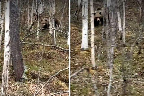 UTROLIG SYN: Bjørnen sto midt på fylkesveien da Maria kom kjørende.