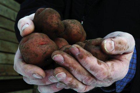 LYSSKY: Poteter skal helst ha det mørkt, kjølig og litt fuktig, sier Lars Roar Holte ved Hoff-fabrikken i Gjøvik.