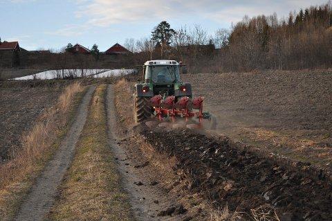 MINKER: – Norge har nå om lag 1,5 dekar fulldyrka jord per innbygger. I år 2000 var det 2 dekar fulldyrka jord per innbygger. Så raskt går det nedover, skriver Torvild Sveen.
