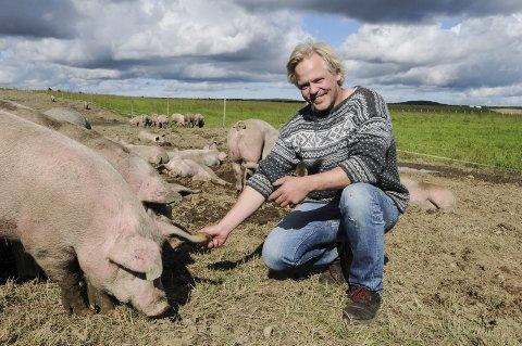 Et godt liv: Knut Ødegårds griser beite på fjellet hele sommeren og langt ut på høsten. Nå er Valdres fjellgris tildelt Spesialitet-merket for hele dyret av Matmerk. Foto: Ingvar Skattebu