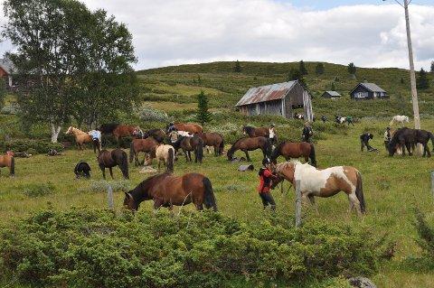 ILLUSTRASJON: Hemsedal Ridesenter arrangerer rideturer med overnatting på Stølsvidda i Valdres. ARKIVBILDE