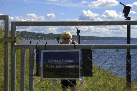 Å, jeg vet en seter: Oscarsborg er et bra alternativ for tobeinte, sier T. Lunde.  Bildetekst