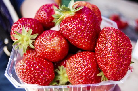 Neste uke blir det Østfold-jordbær å få kjøpt i butikken