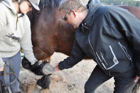 HESTEKAR: Ragnar Kjærnes er en profesjonell hestekar som bor på Kjærnes i Ås. Under en ridetur søndag 10. april ble han og to andre ryttere skadet da en løs hund løp i beina på hestene. FOTO: ANITA GJØS