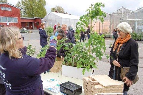 JUKSER LITT: - Det er til barna, sier Josie Teurlings som handler tomatplanter, løk og rødbeter hos Trine Hvoslef-Eide under Fascination of Plants Day på NMBU.