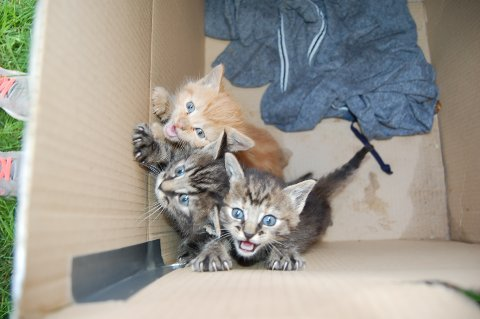 TRENGER NYE HJEM: Den gråstripede har allerede fått et nytt hjem hos Joakim Syversen. De to andre ble levert til Kattehuset i Moss tirsdag.