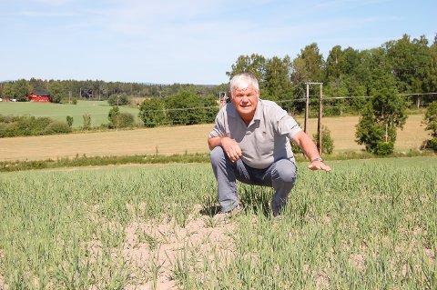 KORTE STRÅ: Kornstråene skille vært i alle fall så høye nå  begynnelsen av juni, forteller Ottar Kjus på Østby østre gård i Ås.