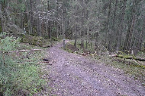 DÅRLIG STAND: Stien ned fra Slåbråtan var hovedadkomsten til marka, men er nå i dårlig forfatning.