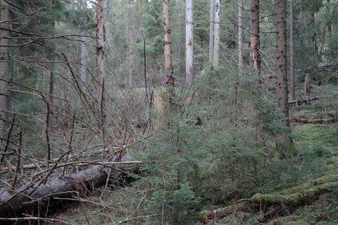 (C): Reservatliknende tilstand i uskjøttet skog.