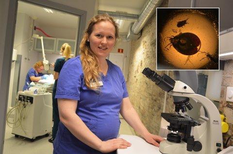 DYRLEGEN: Ann-Jorid Evensen er dyrlege ved Larvik Smådyrklinikk og gjennom mikroskopet kunne hun raskt slå fast at de små dyrene som krøp rundt på en kongeboa var slangemidd.