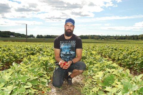 Jordbærdyrker Sondre Austien sier at det ikke er noen grunn til bekymring, da butikkhyllene snart vil fylles opp igjen med nye jordbærslag.