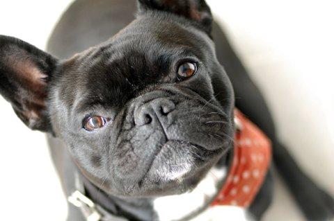 ANGST OG REDSEL: Mange hunder, katter, gnagere og ville dyr utsettes for en stor påkjenning som følge av fyrverkeriet på nyttårsaften.