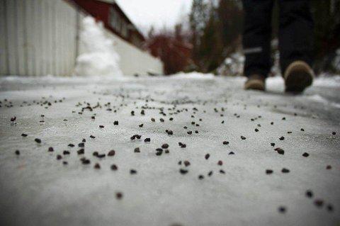 TUSENVIS AV TONN: 3.000 tonn med strøsand har det gått med i Larvik denne vinteren. Det er mye.