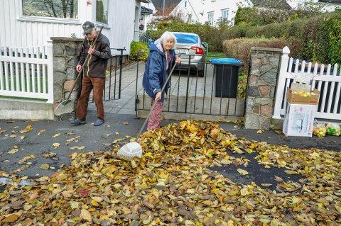 Ekteparet Dag Bruu og Anne-Lise Kragelund Bruu må ta saken i egne hender for å ikke få hagen full av løv.