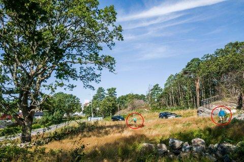 SIKKERHETSSONE: Tom Skjønhaug (t.h.) og Thomas Hansen viser hvor langt unna treet byggearbeidene må foregå, ifølge anbefalingene fra treeksperten som er engasjert av Larvik kommune. – Da er det ingenting igjen av tomta, sier de to.