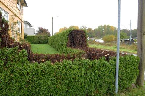 HEKK: Eieren av denne hekken klippet den ikke i tide. Da tok kommunen saken i egne hender.