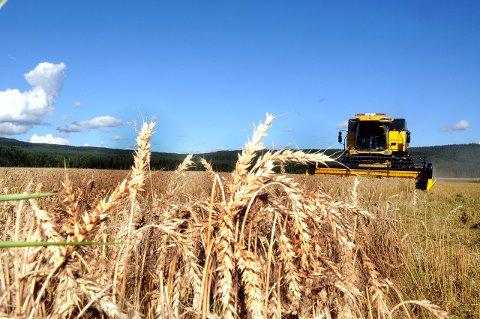 En prosent: Kun en prosent av arealet i Norge egner seg til korndyrking. Dette arealet er under størst press. Foto: Sverre Viggen