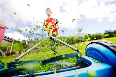 Plenen bør bli skikkelig tørr etter vinteren før man steller og gjødsler den. (Illustrasjonsfoto: Kyrre Lien, NTB scanpix/ANB)