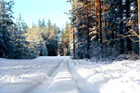LØYPE: Ved skistadion til Strandbygda IL ved Stavåsen er det kjørt løyper slik at elverumsingene kan komme seg på etterlengtet skitur.