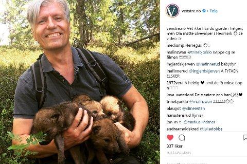 MER Ulv:  Artikkelforfatteren har liten sans for statsråd Ola Elvestuen og hans  parti, Venstres,  syn på ulv.