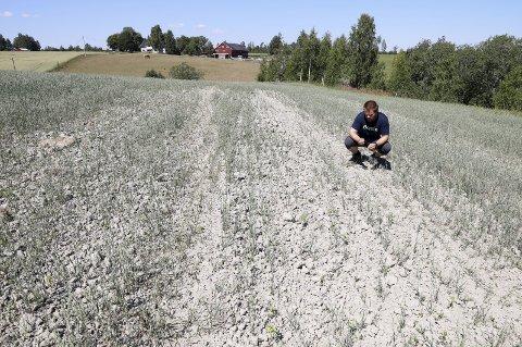Tørkesommer: Årets avlinger for bøndene har vært en katastrofe.Foto: NTB Scanpix