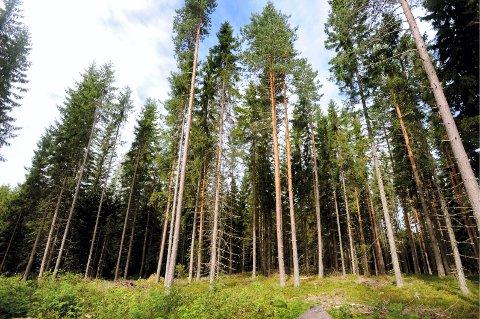 SKOGEIENDOM TIL SALGS: 8.750.000 kroner er prisantydningen for skogteigen. Illustrasjonsfoto: Anita Høiby Gotehus