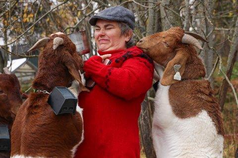 Å hanskes med store geiter fra Sør Afrika, krever sin kvinne.