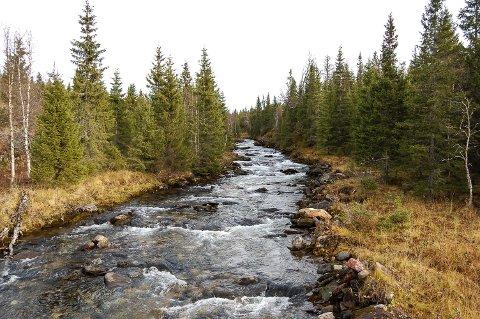 Elva Silåga i Grønfjelldalen vil for all framtid renne vill og urørt i naturen. Olje- og energidepartementet stoppet de lokale utbyggingsdrømmene.