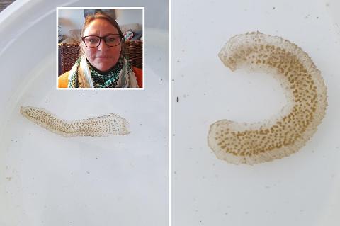 MYSTISK TING: Heidi Lindstadhagen (innfelt) fant dette i strandkanten på Helgøya tirsdag. Hva kan det være?