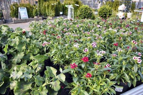 Åpner igjen: Blomsterkroken gikk konkurs, men et nytt hagesenter med nesten samme navn starter på nytt. Her fra Blomsterkroken i Moelv.