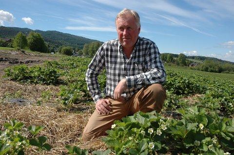 Jordbærbonde Geir Hæhre sier årets bær er litt forsinket på grunn av været.