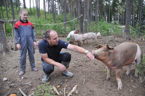 Gårdbruker og politimann Ola Fjeldstad på Røyse har 33 frilandsgriser gående på beite i Frøshaugåsen. Det er første året han gjør et forsøk med oppdrett av griser i en 10 mål stor inngjerding i skogsterreng. Datteren Anette følger spent med.