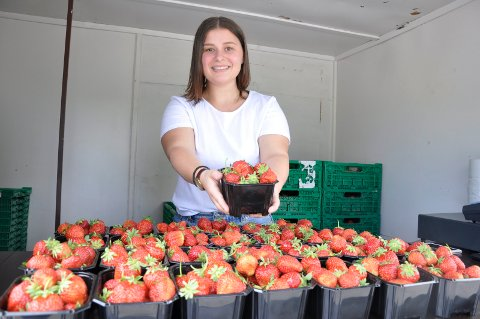 Bie Redzepi selger jordbær fra Trond Western