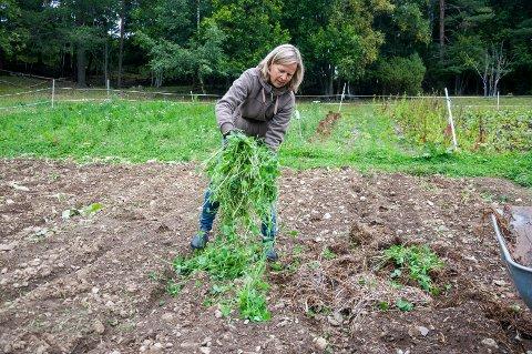 Birgitte Udo de Haes anbefaler å legge hageavfall over jorda i kjøkkenhagen når sesongen er over og vinteren nærmer seg.