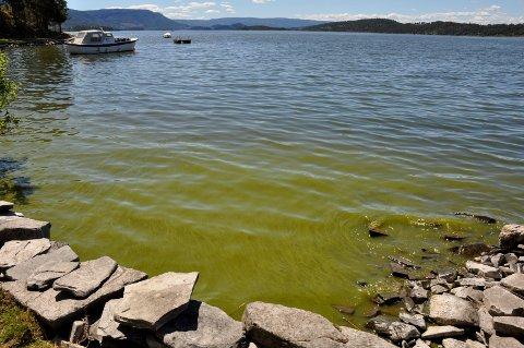 Samles mye alger inn mot land kan nivåene i disse områdene være mye høyere.