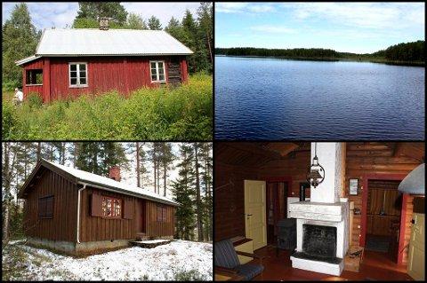 PRISGALOPP: Folberg skog ved Årnes ble solgt for en pris nesten 60 prosent over prisantydning.Foto: Norsk Landbruksmegling