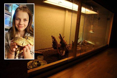 Julegave: Julie Hagen (13) poserer stolt sammen med slangen hun fikk til jul.